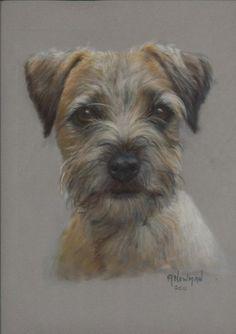 "Border Terrier ""Callen"" by Anneke Newman Pastel ~ 35cm x 25cm"