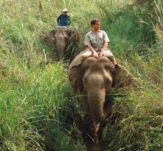 Elephant Camp in Thailand. I would probably cry the whole time out of pure joy.
