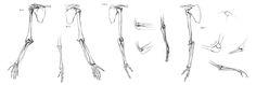 Anatomy Study - arm bones by Call0ps.deviantart.com on @DeviantArt
