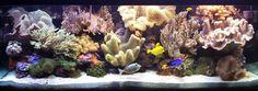 Coral Reef Aquarium Fort Wayne In