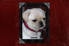 """Fairytailpuppies """"where pets are family too - SARAH"""