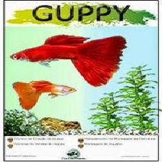 blogg da gente: Como Criar Guppy