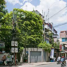 Green Renovation by Vo Trong Nghia<br /> offers verdant urban living