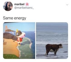 Stupid Funny Memes, Haha Funny, Funny Posts, Funniest Memes, Funny Shit, Funny Stuff, Hilarious, Animal Crossing Funny, Animal Crossing Pocket Camp