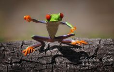 Personality-Filled Frogs by Penkdix Paime
