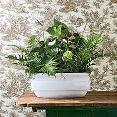 Indoor Container Gardening Ideas: Rely on leaves because sometimes, simplicity is best.