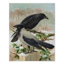 Image result for crow vintage