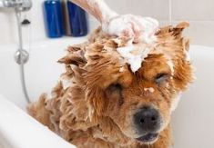 Top Best house Dog Wash Station Ideas. * You can get additional information at the image link. Puppy Care, Dog Care, Pet Dogs, Dogs And Puppies, Doggies, Dog Washing Station, Cheap Pet Insurance, Wild Animals Photos, Canela