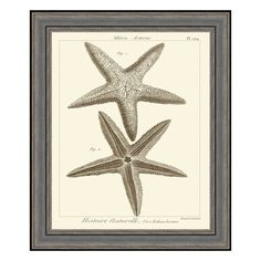 Five-Arm Vintage Starfish  @ PureHome