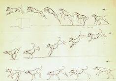 Dog jump cycle