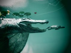 Alligator vs. Turtle | Flickr - Photo Sharing!