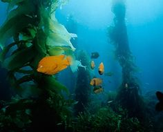 Channel Islands, California - World's Greatest Diving Spots | Travel + Leisure