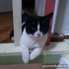 Es ist zu heiß heute!!! Findet Schecki #gourmetkater #cat #hitze #katze #sommer #summer #heat