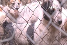Dogs Seized From Puppy Mill Being Transported To Other Shelters