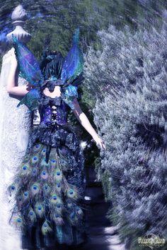 Darkstar Peacock Fairy » Firefly Path
