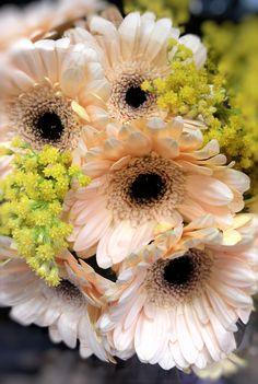 light orange Daisy  #springflowers #orange #yellow #spring