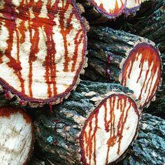 Arboles añosos cortados en Puerto Madero. Quien dijo que los arboles no sangran? Esta foto no esta trucada, me impresiono mucho ver esto y por eso saque la foto.  Facebook / A MAS ARTE MAS PARTE  FOTO BY RICARDO STEFANI WWW.RICARDOSTEFANI.COM.AR