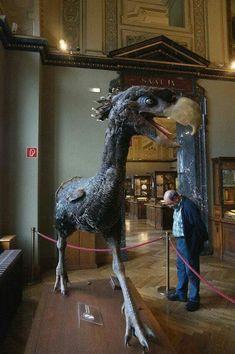 El ave del terror (Phorusrhacidae) habitó hasta 2 millones de años. Medía entre 1-2,5 metros y sus parientes más cercanos hoy en día son las chuñas. Crédito: Museo de Historia Natural de Viena