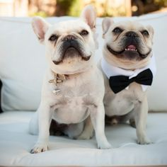 """One of the most elegant backyard weddings we've ever seen.  Complete with outdoor chandeliers  the cutest """"attendants""""!"""