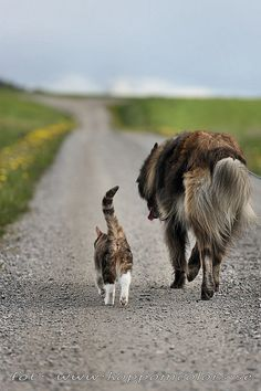 Cat and dog down the road travelers 20150527076306 | by koppomcolors