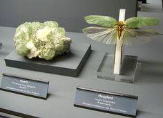 Marcia Batoni - Artes Visuais: As Jóias Voadoras