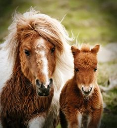 Mare with her baby foal horse