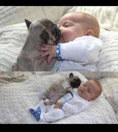 on - Babys - Perros French Bulldog Puppies, Cute Dogs And Puppies, Baby Dogs, Doggies, Cute Little Animals, Cute Funny Animals, Animals For Kids, Wild Animals, Funny Babies