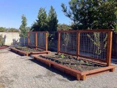 How to Garden Vegetables | Random Photo Gallery of How To Start A Vegetable Garden