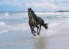 je l'adore en plus il court dans la mer