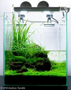 Fuck Yeah Aquascaping: Photo