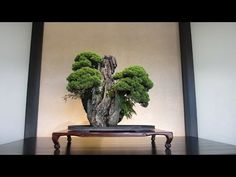 Omiya Bonsai Village - YouTube