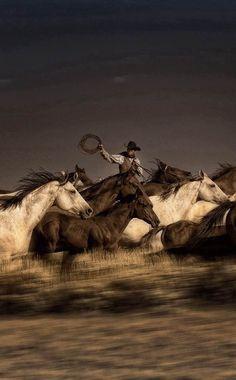 #horses #HorseSadles