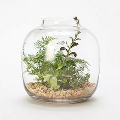 Water Jar Terrarium