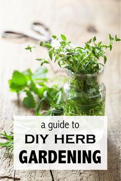 Grow your own herbs at home for instant access to fresh products. Fresh herbs have so much more aroma than those old dried herb jars sitting in your pantry. To grow your own herb garden, start by picking up a great reference book and think about the herb plants you'll be most likely to use. Some are for culinary purposes, while others have wonderful medicinal benefits. You may want to purchase a hydroponic grow light for indoor gardening. Read on for more DIY herb gardening tips from eBay.