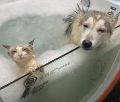 Ahhh this is the life - Süße Tiere - Sweet Animals! Funny Animal Pictures, Cute Funny Animals, Cute Baby Animals, Funny Dogs, Animals And Pets, Cute Cats, Funny Humor, Funny Stuff, Funny Animal Gifs
