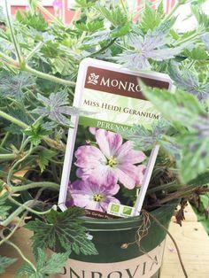 My Newbie Gardener's Guide to Choosing Perennials with #MonroviaPlants #sp #GrowBeautifully, via @sarahsarna.