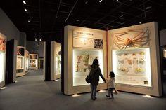 神奈川県立 生命の星・地球博物館 - Google 検索