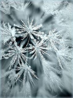 Snow - Crochet Rising | Crochet Rising