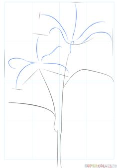 How to draw tiger lily | Step by step Drawing tutorials