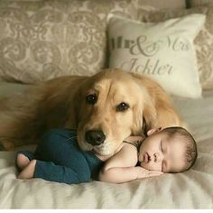 Funny And Cute Golden Retriever Puppies Compilation - Cute Puppies Videos Dogs And Kids, Animals For Kids, Cute Baby Animals, Animals And Pets, Funny Animals, Babies With Dogs, Nature Animals, So Cute Baby, Cute Kids