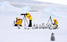 Penguin chicks sit next to photographers in Antarctica by David C Schultz, telegraph.co.uk #Penguin #Antarctica #David_C_Schultz