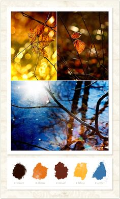 Sunshine in the Fall - Color Inspirationboard - News & Musings - Photographer Photoshop Templates and Marketing Materials