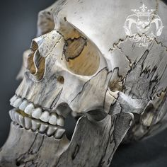 Hand Carved Sculpture Tamarind Wood into Realistic Human Skull THB06 Find this skull on Etsy..!!