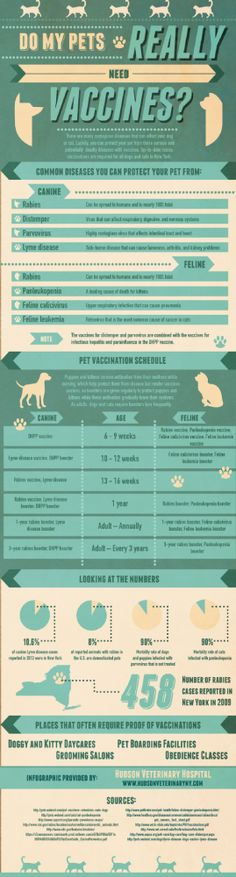 Do My Pets Really Need Vaccines?  At Savy Paws Pet Resort we require Rabies, Distemper & Bordetella.