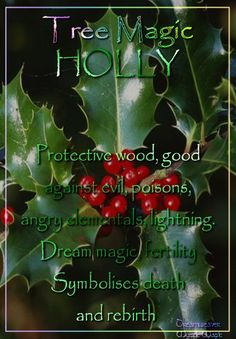 Holly Protective wood, good against evil, poisons, angry elementals, and lightning. Dream magic, fertility. Symbolises death and rebirth