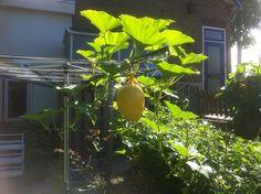Mooie onbekende vrucht