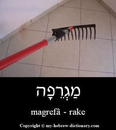 "How to say ""Rake"" in Hebrew -- click to hear it pronounced: http://www.my-hebrew-dictionary.com/rake.php #howtospeakhebrew"