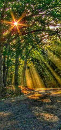 Light Rays, Sun Rays, Beautiful Gif, Sunrises, Nature Wallpaper, Heron, Pretty Pictures, Sunshine, Country Roads