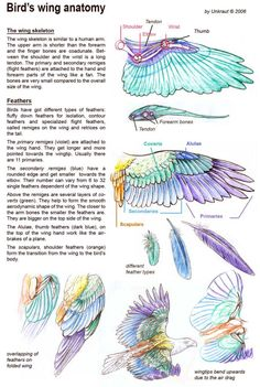 Feather description
