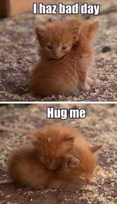 36 Absolutely Adorable And Funny Animals 36 Absolutely Adorable And Funny Animals. More funny animals here. Baby Animals Pictures, Cute Animal Pictures, Animals And Pets, Wild Animals, Baby Pictures, Funny Animal Jokes, Cute Funny Animals, Cute Dogs, Cute Cats And Kittens